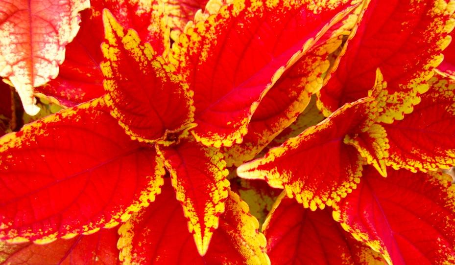 foliage flame